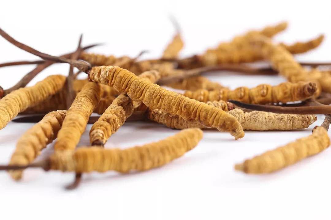 西藏那曲虫草和青海玉树虫草的区别和特点有哪些?