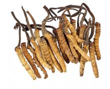 那曲冬虫夏草怎么吃 冬虫夏草的食疗范例